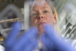color photo of CSU researcher Claudia Wiese looking at slides in the lab