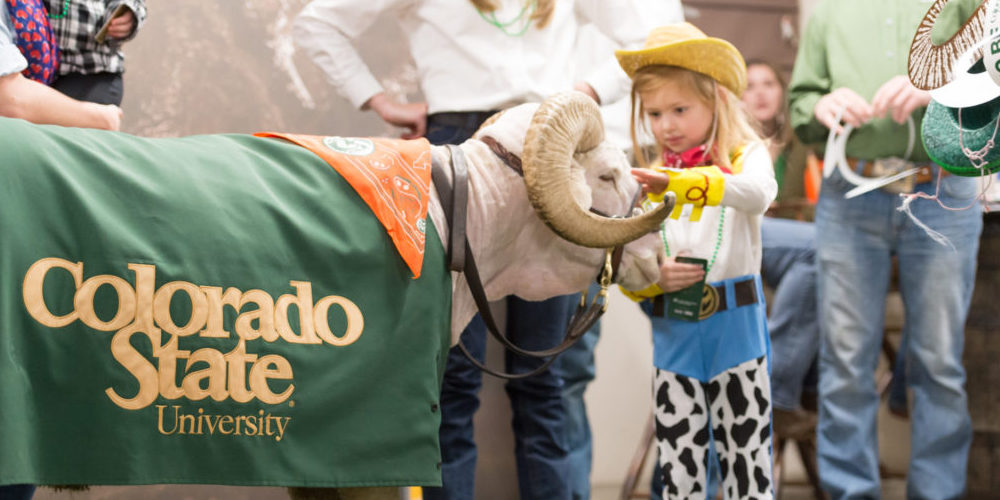 Little cowgirl pets CAM the Ram