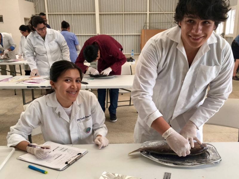 Todos Santos fish pathology workshop participants dissecting fish and taking notes in lab coats.
