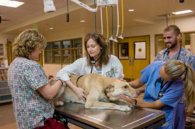 E. Myrl Halstead Jensen Center for Emergency Medicine and Critical Care