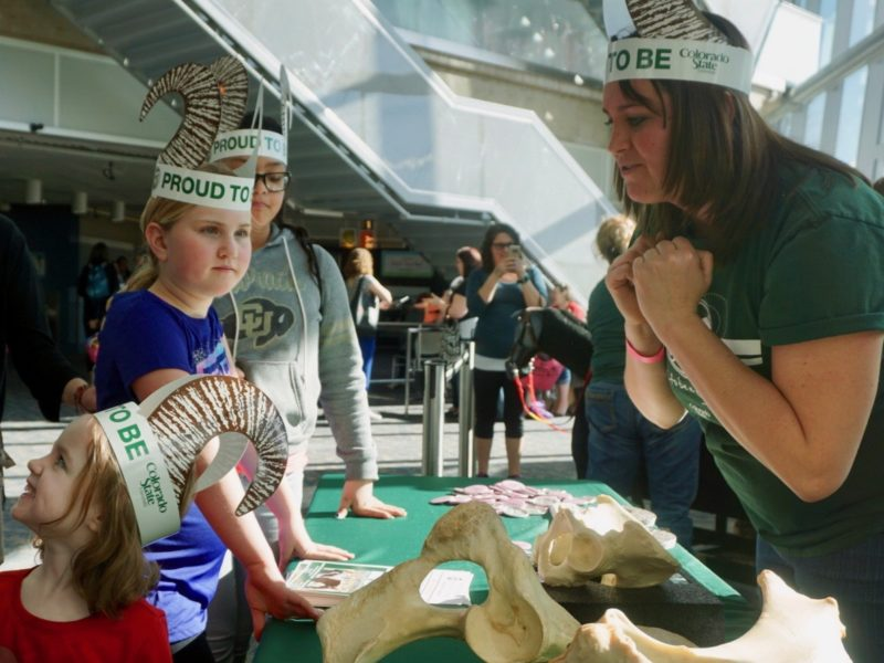 Girls & Science volunteer shows differences between horse and human pelvises to attendees.