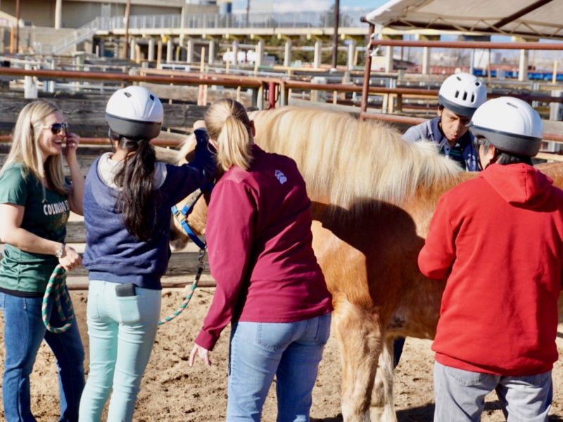 Ciana Dodgion guides students through horse grooming exercise at Temple Grandin Equine Center Open House.