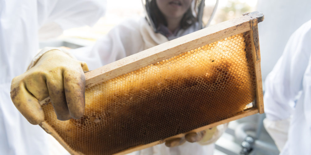 Christina Geldert holds a section of a bee hive
