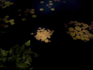 color photo of Pond Night, a work of art by Alice Hargrave. This work shows lily pads in a pond.