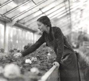 Geraniums and other flowers were staples in horticultural greenhouses at Colorado A&M, as shown in this image from 1935. Photo: Colorado State University Libraries / Archives and Special Collections