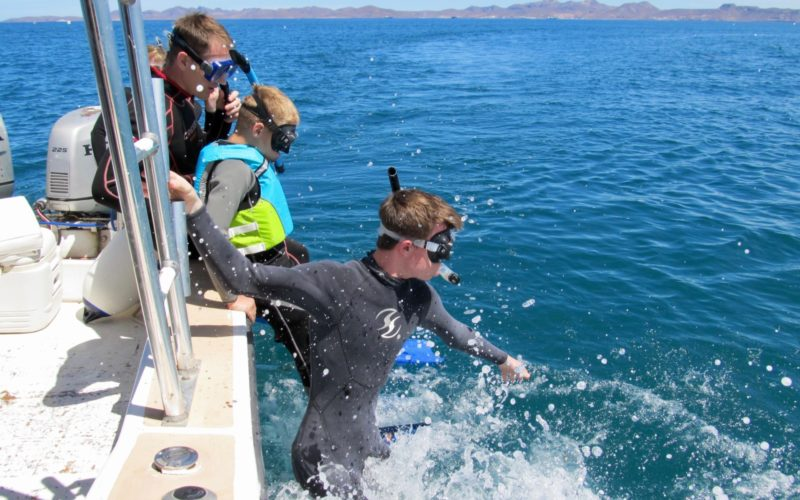 Todos Santos Center Family Adventure Week participant diving into ocean off of boat, snorkeling.