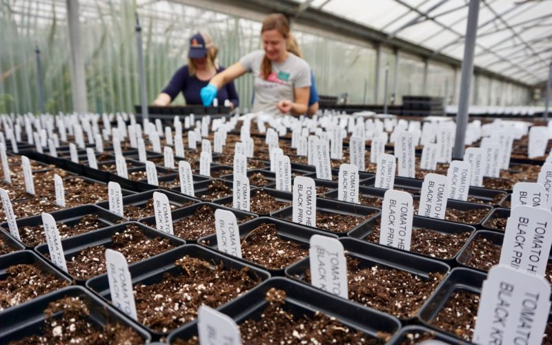 Close-up photo of plants beginning to germinate during planting for Master Gardener Plant Sale.