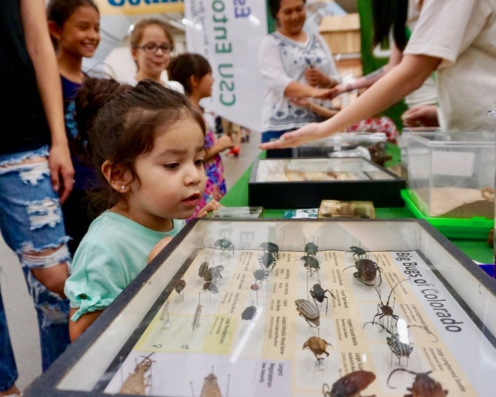 "Young girl looks curiously at ""Big Bugs of Colorado"" display from the CSU Bug Zoo at the 2018 Denver County Fair."