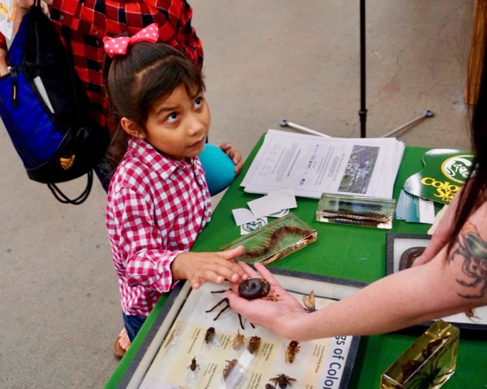 Young girl looks up at CSU Bug Zoo volunteer as she pets millipede at the 2018 Denver County Fair.