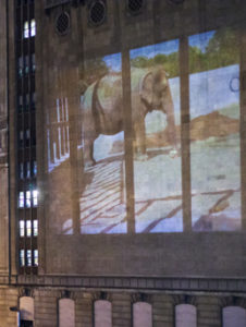 VIDEO OF ELEPHANTS PROJECTED ON BUILDING