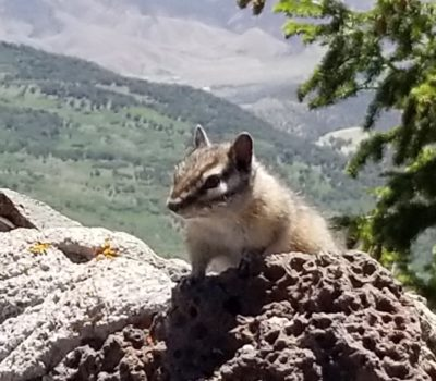 Chipmunk on Grand Mesa