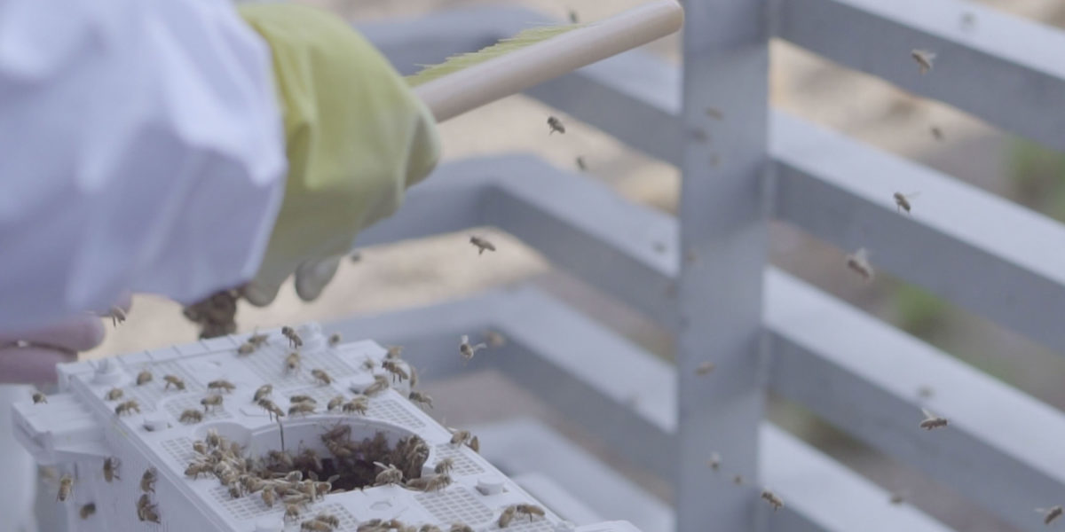Honey bees have been placed in three newly built hives as part of the campus-wide initiative to educate the Colorado State University community about the importance of bees to our ecosystem.