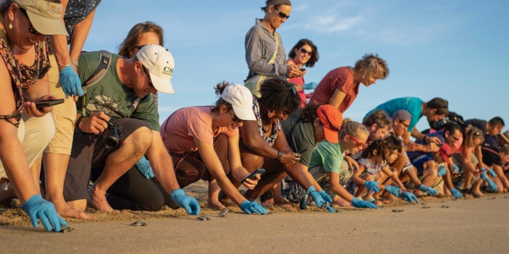 Participants of the 2018 Spanish & Culture Immersion Program at the CSU Todos Santos Center release baby sea turtles into the Pacific Ocean.