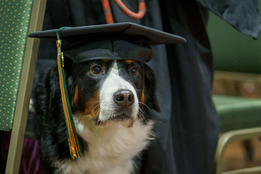 Dog in mortar board