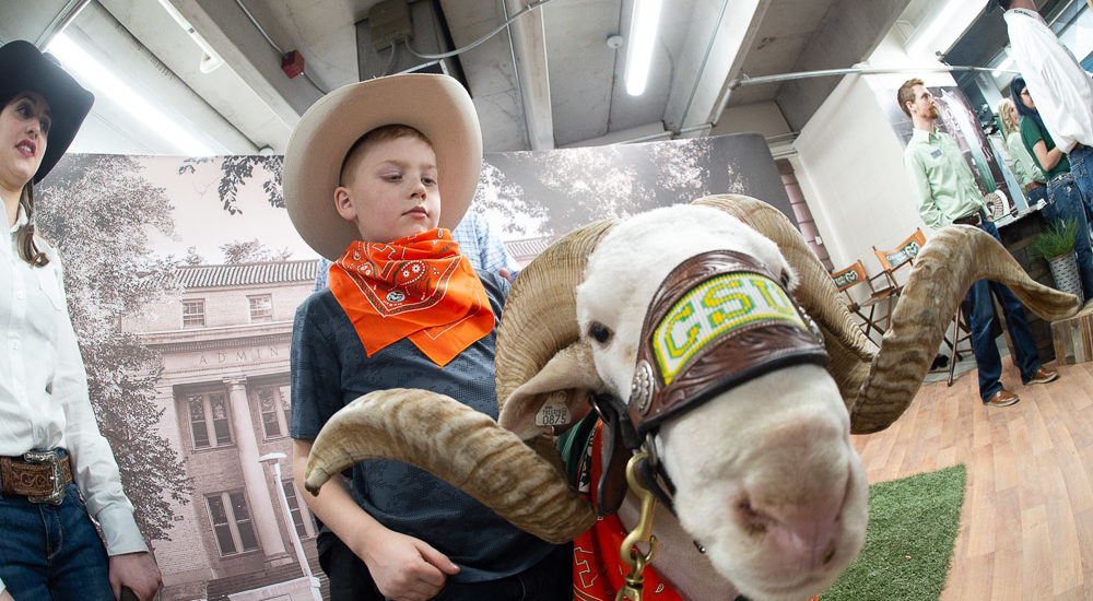 CAM the Ram with little cowboy