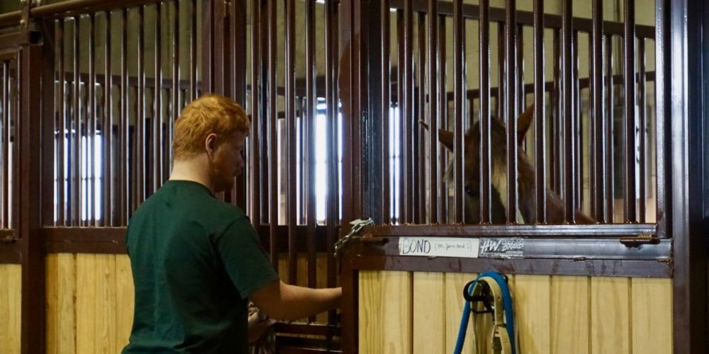 Michael McGrady reaching into horse stall at the CSU Temple Grandin Equine Center.