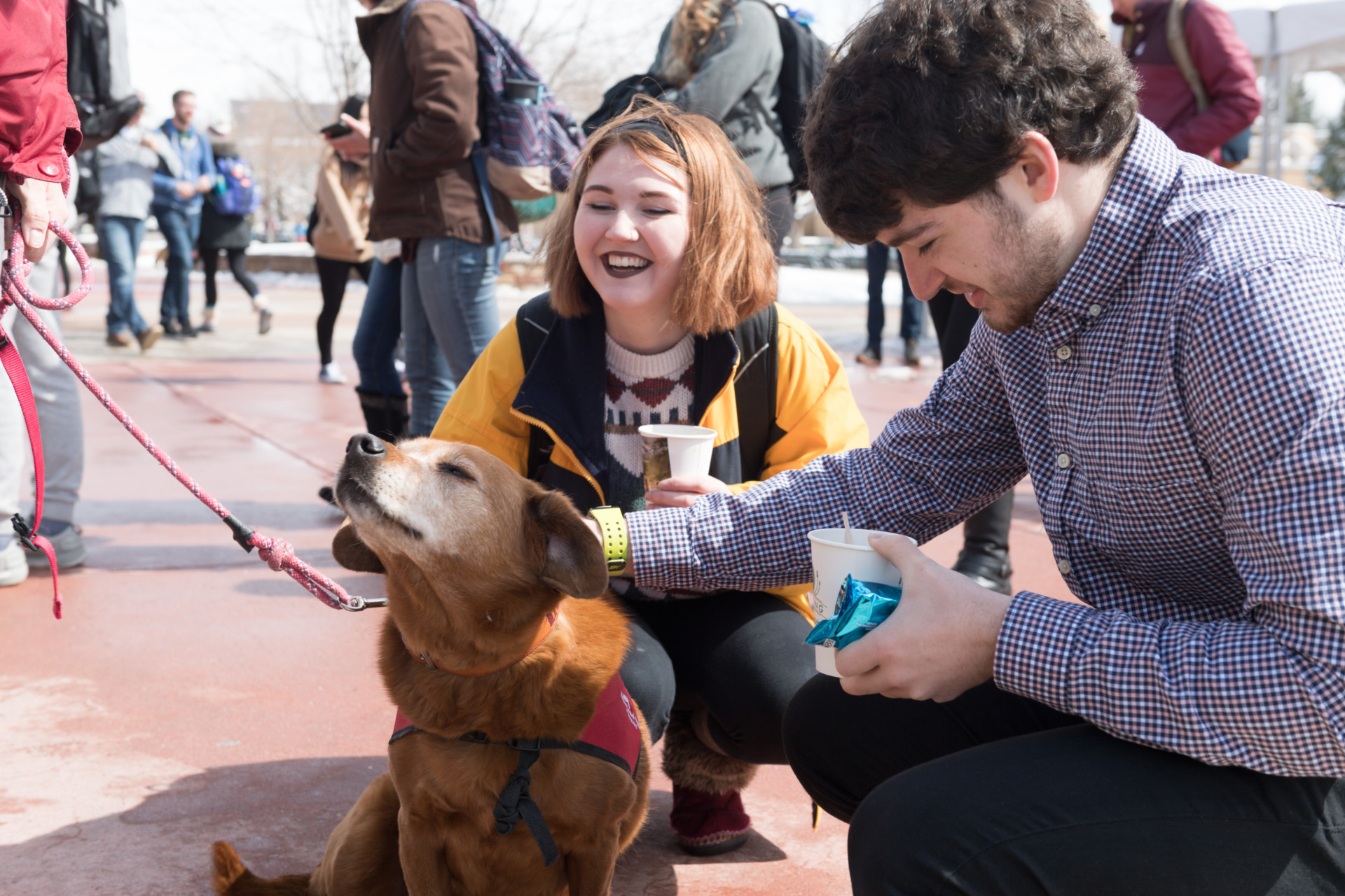 Colorado State University School of Education Therapy assistant professor Andrea Sebald's Human Animal Bond in Colorado therapy dog Lola entertains students and encourages them to get information on Summer Session during Pups on the Plaza