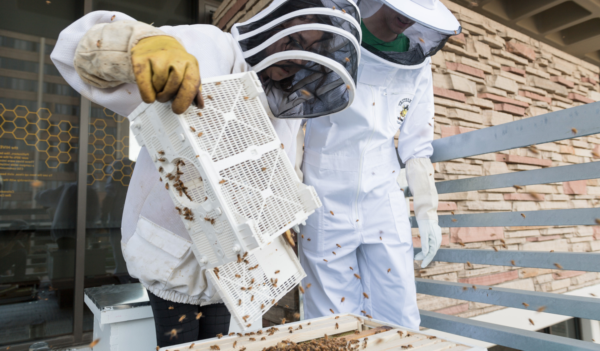 Students handling bees