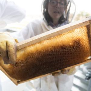Student handling bees