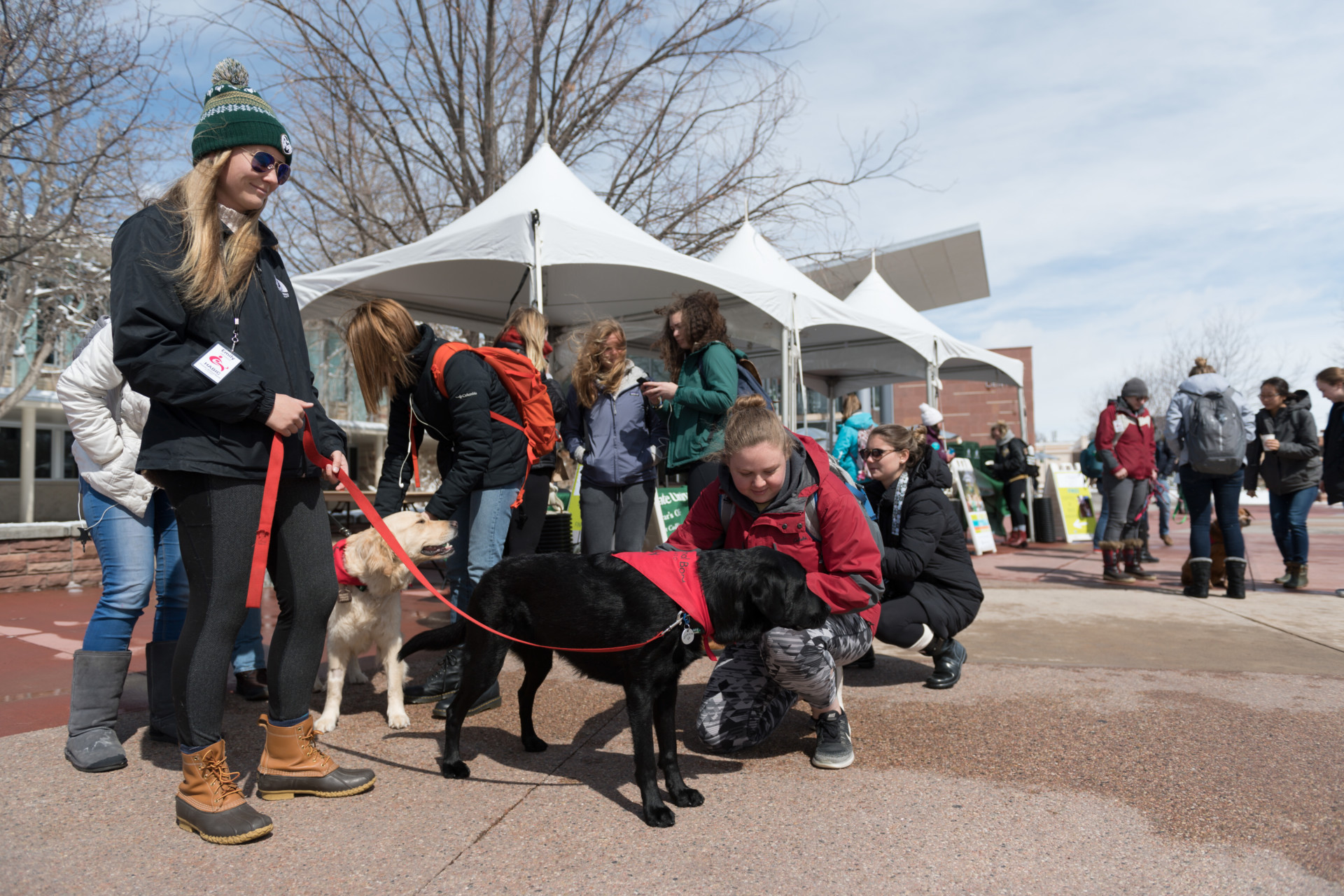 Colorado State University social work student Emily Oltmanns' Human Animal Bond in Colorado therapy dog Jackson entertains students and encourages them to get information on Summer Session during Pups on the Plaza