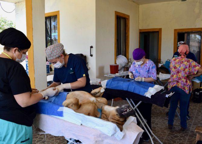 Dr. Danielle Frey y su equipo realizan cirugías de esterilización/castración en una locación cerca de CSU Todos Santos Center.