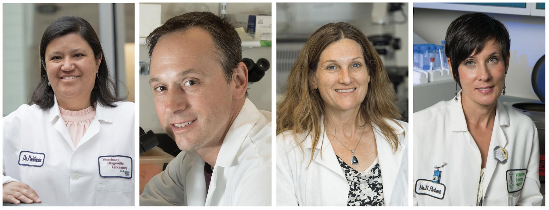 portraits of researcher Kristy Pabalonia, Greg Ebel, Sue Vandewoude and Nicole Ehrhardt