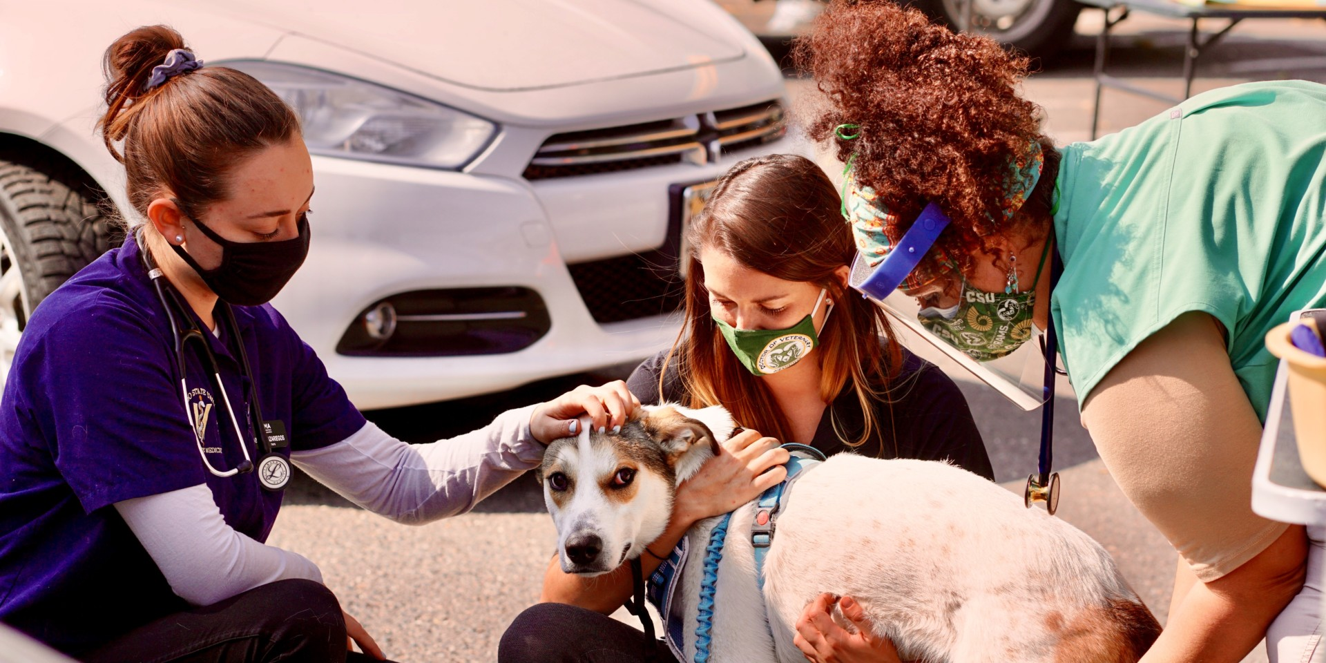 CSU D.V.M. student-volunteers examine dog at seventh annual CSU Spur Focus on Health Community Clinic in Denver on Oct. 3, 2020.