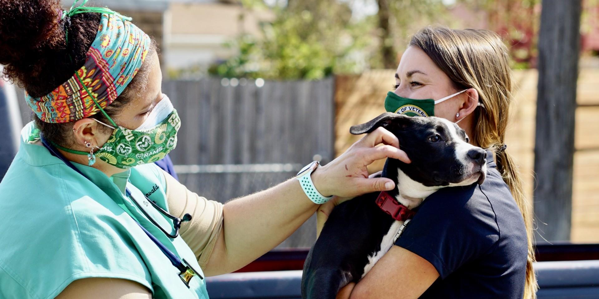 Volunteer veterinarian and CSU D.V.M. student examine dog at seventh annual CSU Spur Focus on Health Community Clinic in Denver on Oct. 3, 2020.