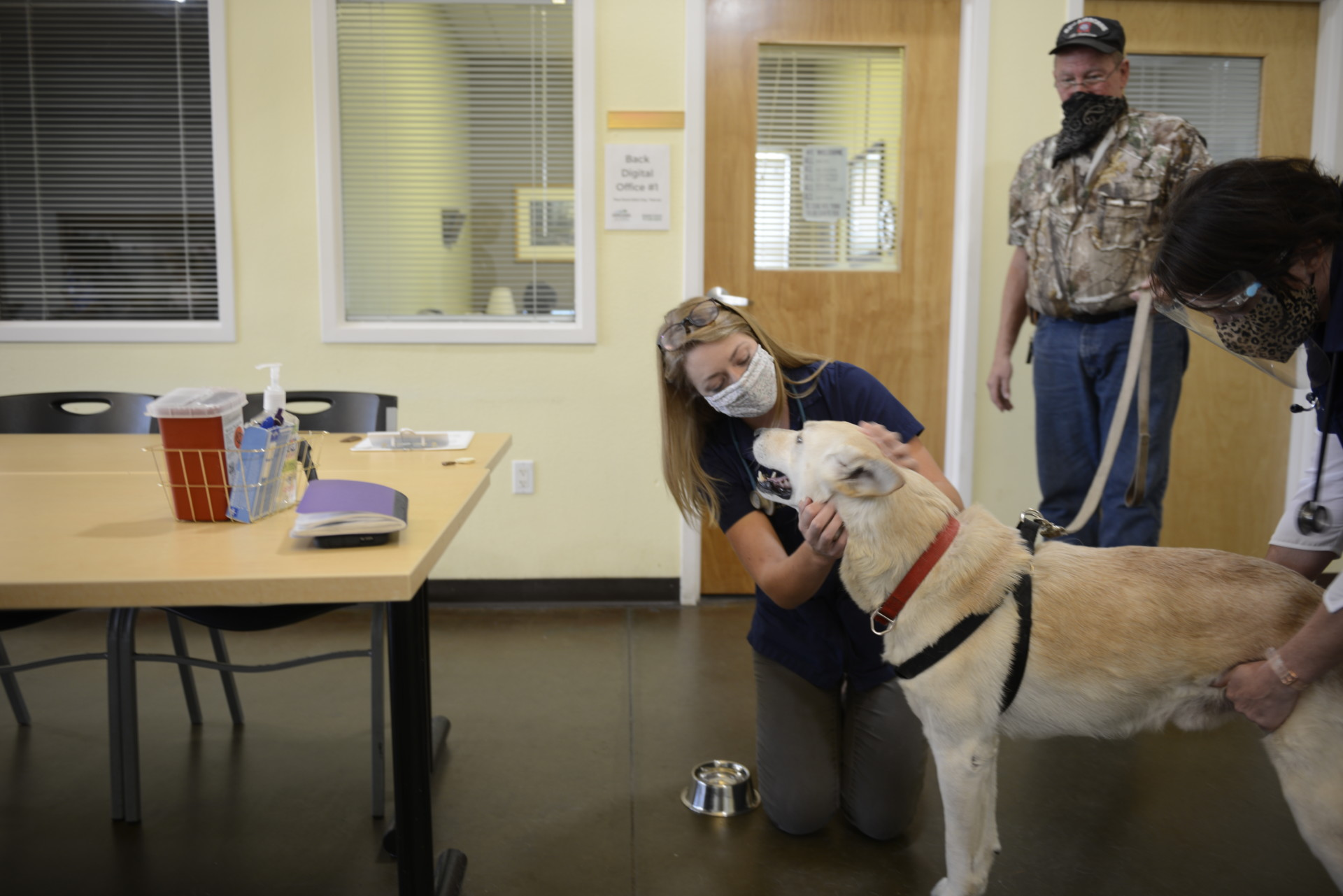 Dog being examined at Murphy Center