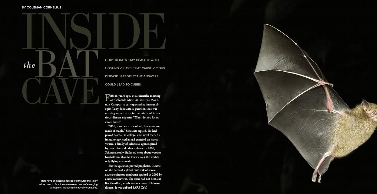 Inside the Bat Cave image