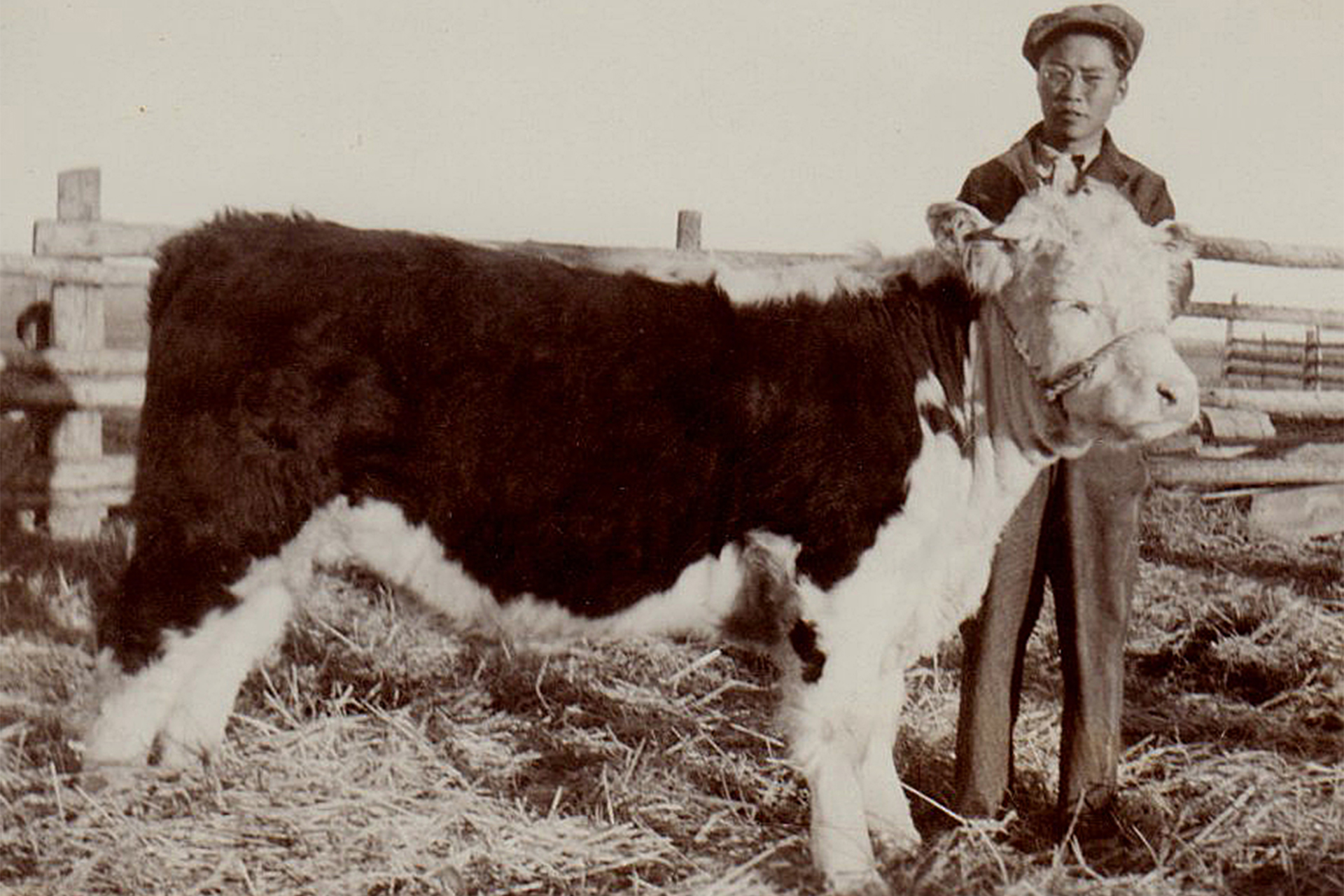 Young John Matsushima with a steer