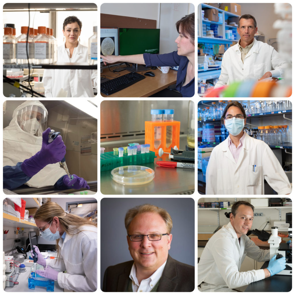 a photo collage of researchers working on a coronavirus vaccine at CSU
