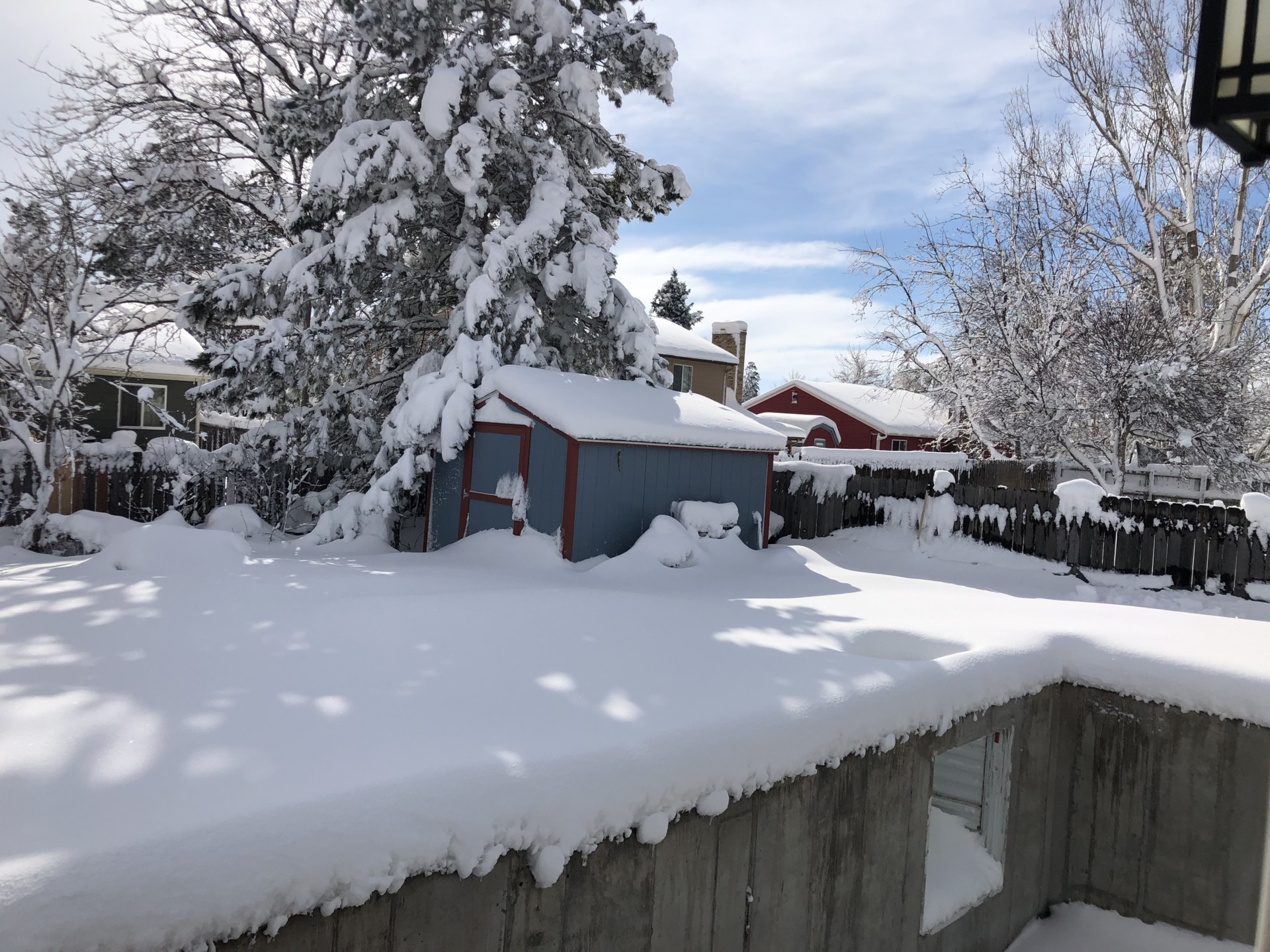 Snowed-in backyard with shed, March 15, 2021