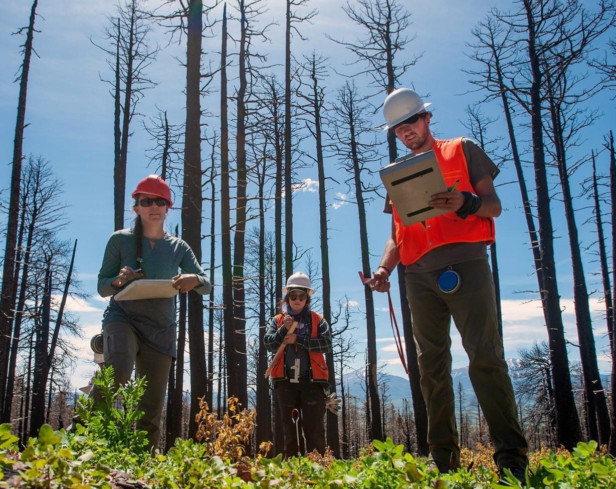 Camille Stevens-Rumann doing forestry work in the field