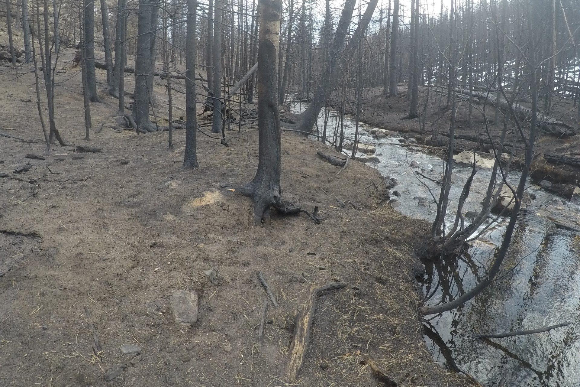 burned riparian area following the Cameron Peak Fire