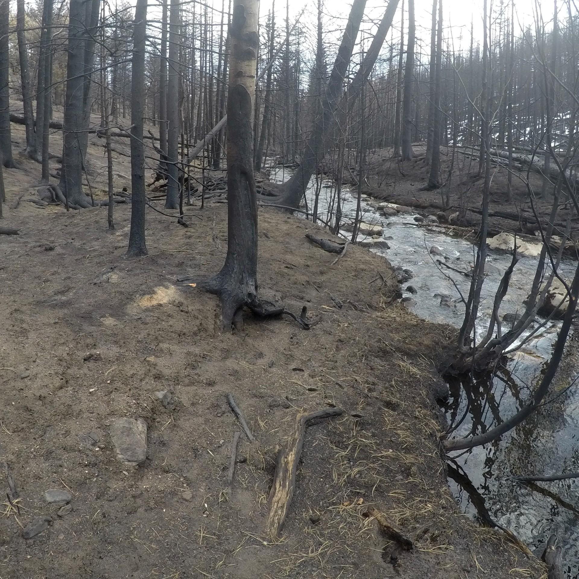 a burned zone near Little Beaver Creek near CSU's Mountain Campus