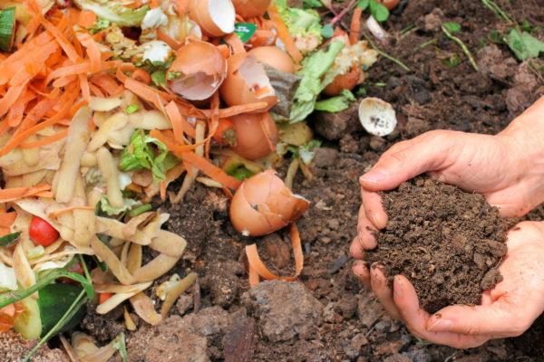 Hands in compost